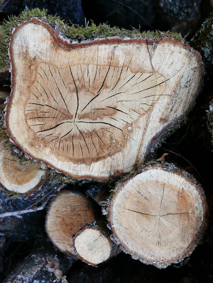 coupe de bois de charme photo et image | nature images fotocommunity