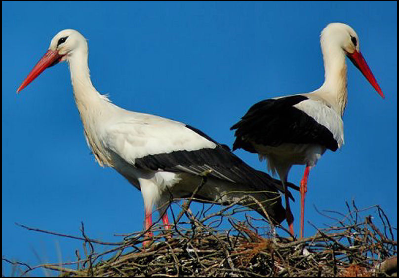 Couple of angry storks?:-))