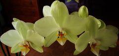 couronne d orchidèes