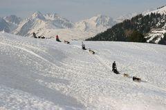 Course sur la neige