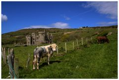 cow and castle....