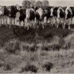 cow casting mit Dialog