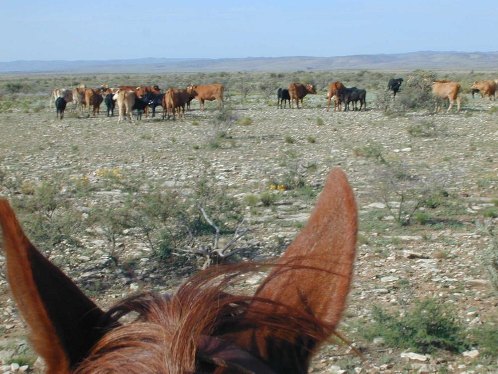 Cowboys view