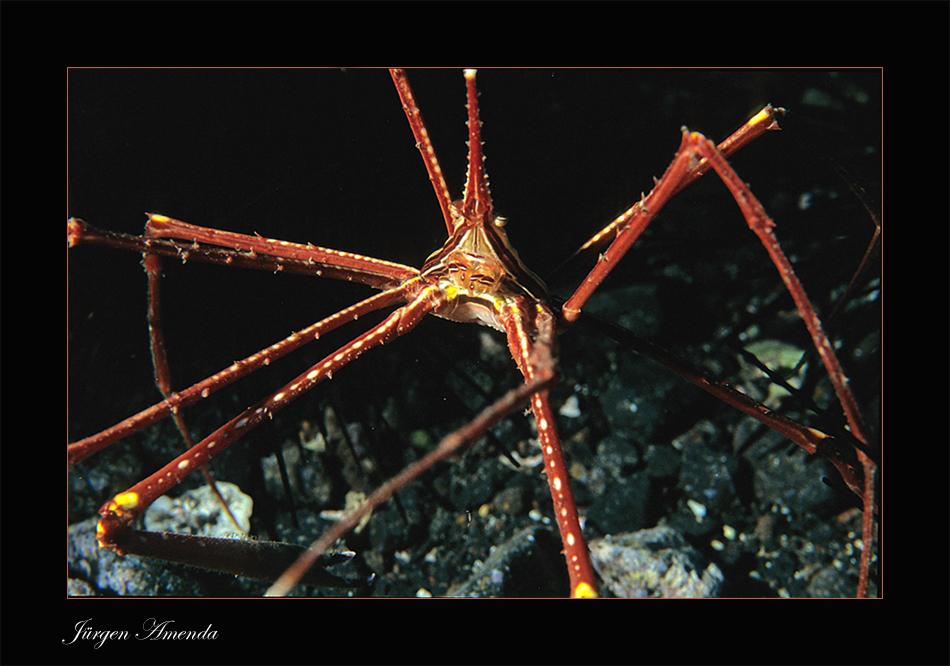 ...crab...