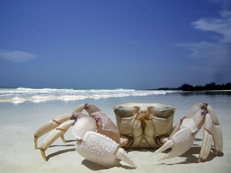 Crab portrait