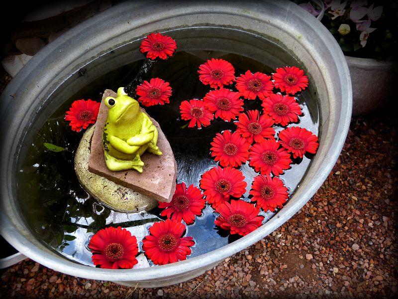 Cranky frog