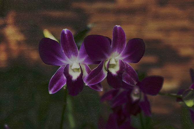 Craquelered Orchids