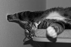 Crazy Cat ?!?