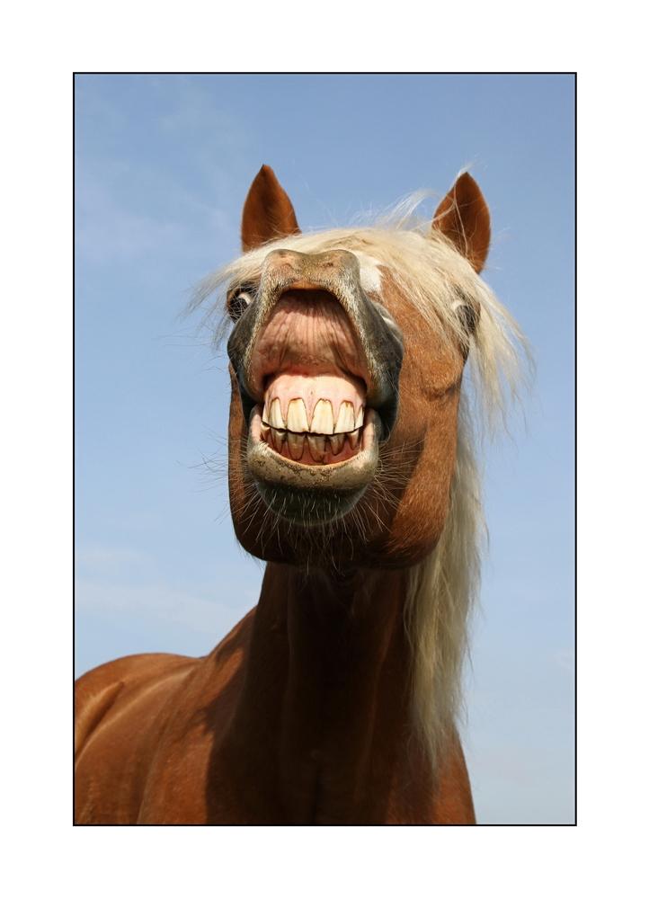 Crazy Horse I Foto Amp Bild Tiere Haustiere Pferde Esel