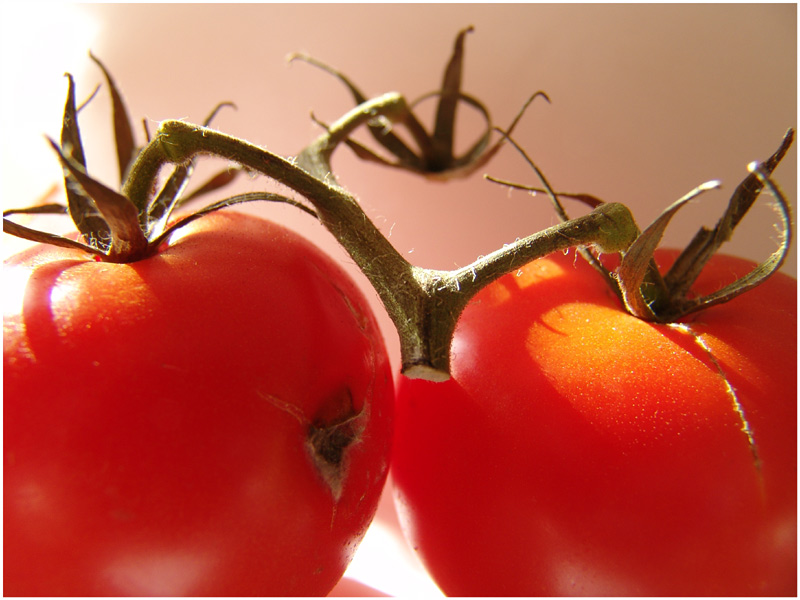 ::: crazy tomatoes :::