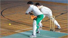 ... Cricket ...