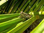 Cricket sur toboggan