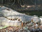 Croc's Teeth