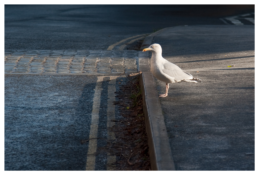 Crossing the Road...