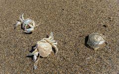 Crustacea und seine Freunde