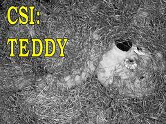CSI: TEDDY Tatort Raststätte