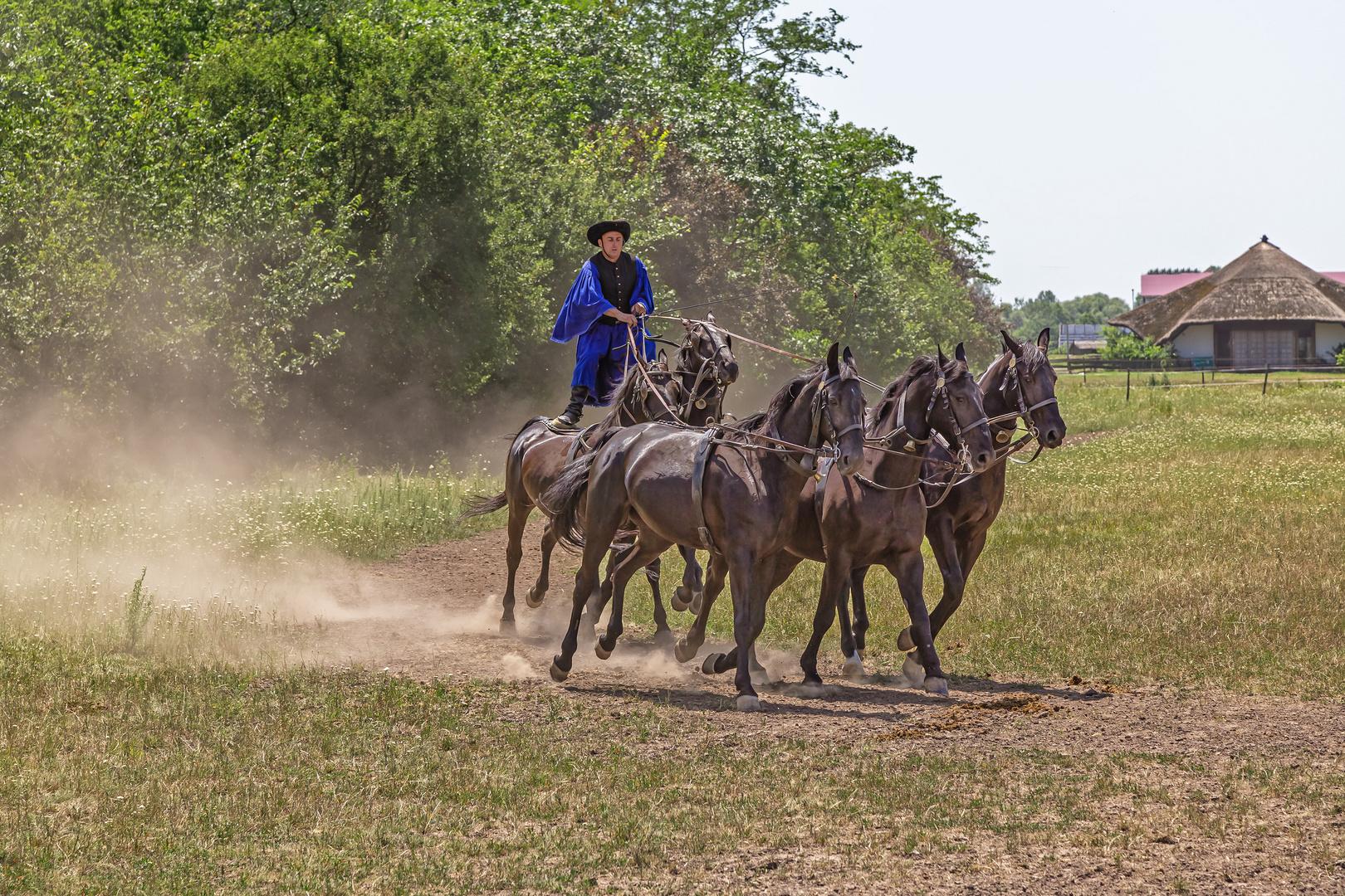 Csikós mit galoppierenden Pferden