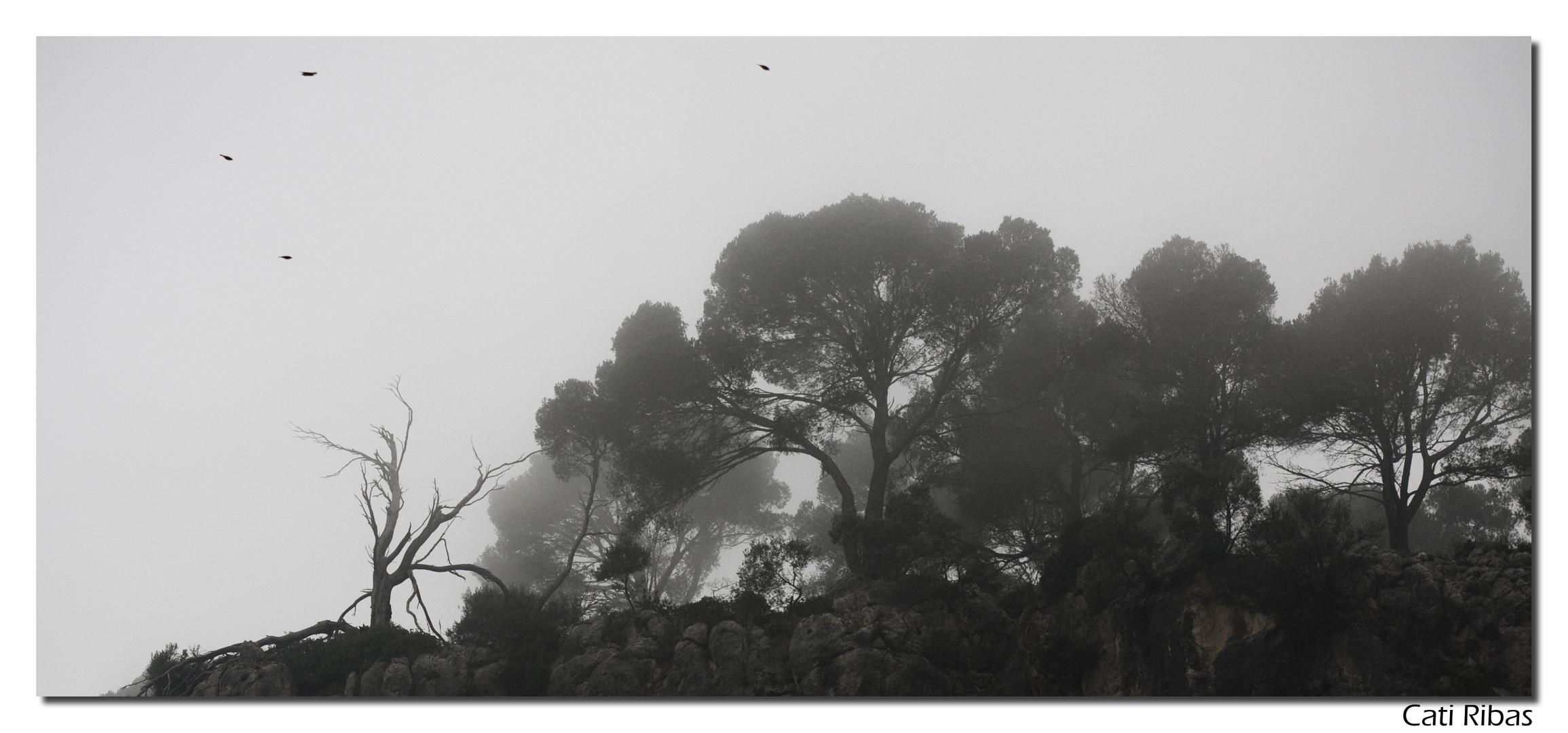 Cuando cae la niebla