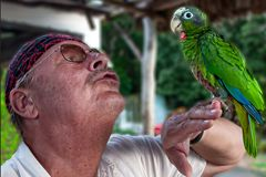 Cuban parrot on my hand