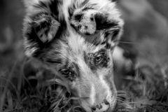 cucciolo #2