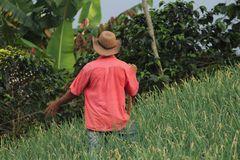 Cultivador de Cebolla