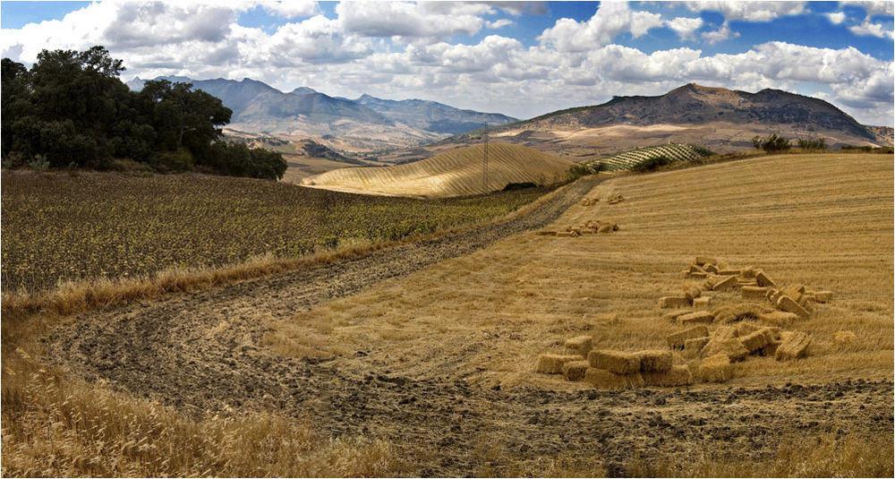Cultivos en la Serranía
