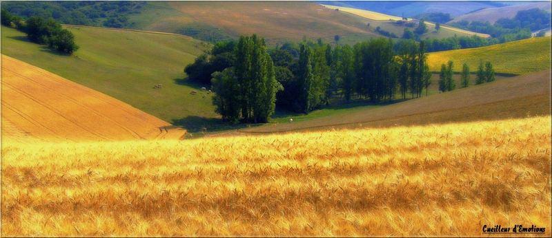 cultures panoramiques