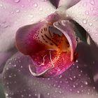 Cuore di Orchidea