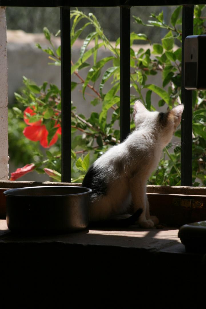Curiosidad felina