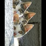 curiosità felina...
