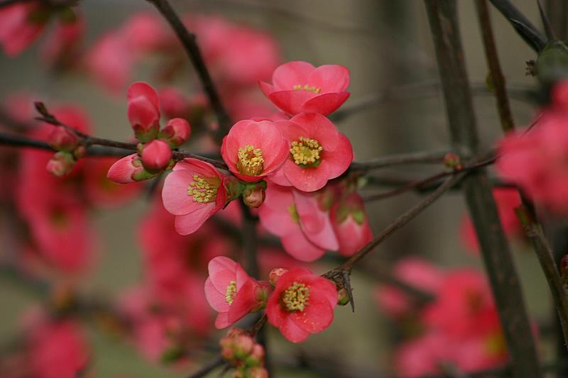 cvijet s trnom