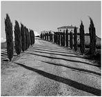 cypress alley (2)