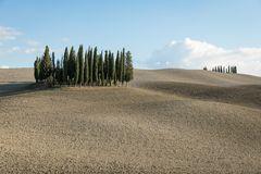 Cypresses, San Quirico d'Orcia