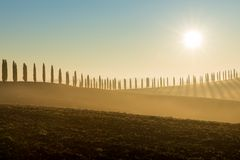 Cypresses, Ville di Corsano