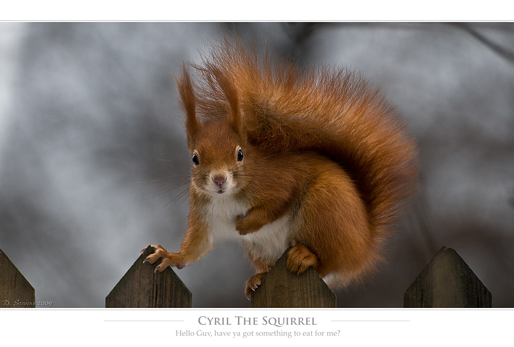 Cyril The Squirrel 2