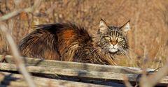 Da erschien plötzlich die Katze... - Apprivoise-moi !