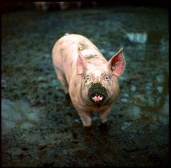 da fällt mir ein, ich hatte schon lange kein schwein mehr...