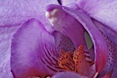 Da fiore a farfalla
