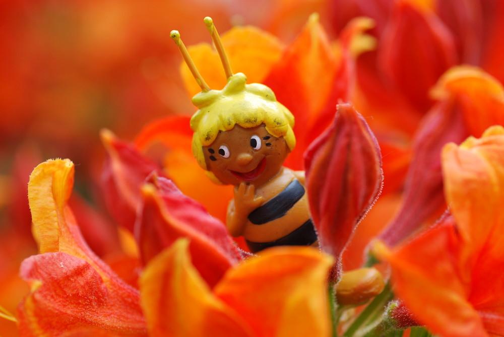 Da freut sich die Biene