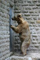 Da geht der Baer einmal in den Zoo und keine Menschen zu sehen, schade :o))