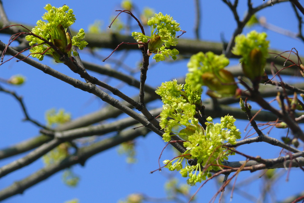 da isser... der Frühling