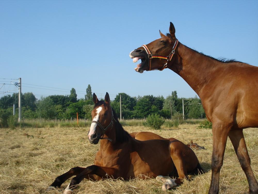 Da lachen ja die Pferde