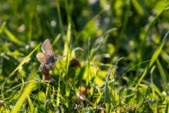 Da sehe ich endlich einmal einen Schmetterling