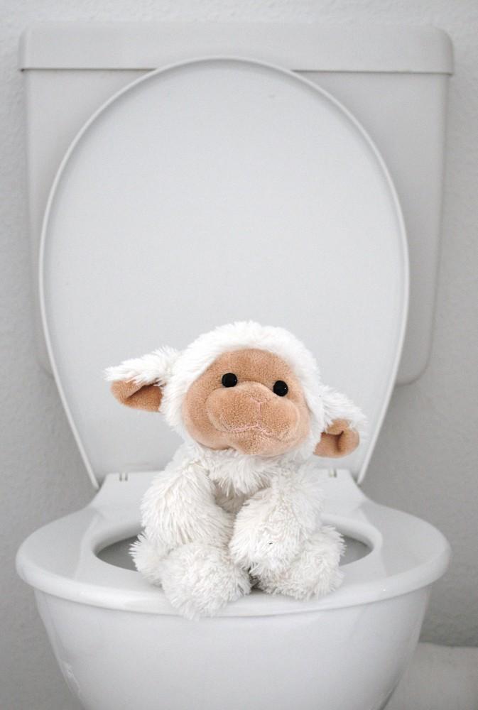 Da sitzt ein Schaf auf´m Klo und kein Pferd auf´m ...