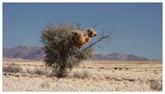 Da sitzt ein Schwein auf dem Baum