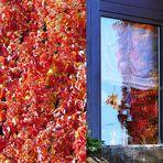 da spiegelt sich der Herbst