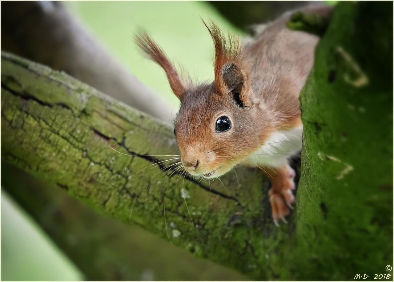 Da staunte das Eichhörnchen ...