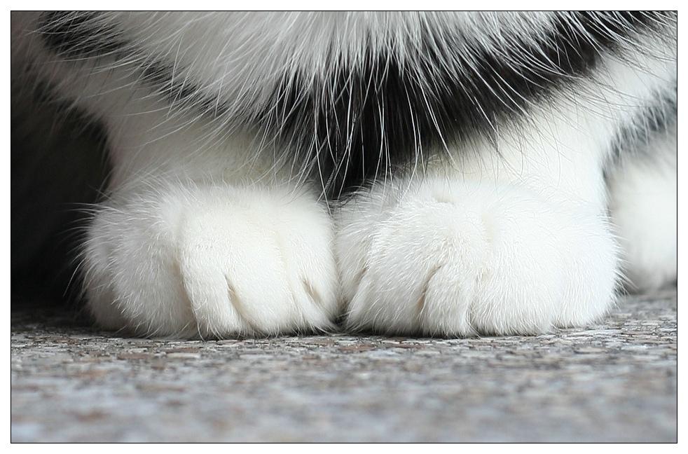Da stehen Katzen drauf ;-)