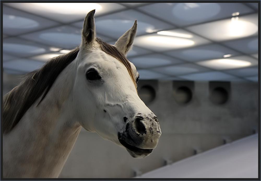 Da steht ein Pferd ...