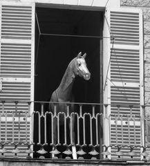 Da steht ein Pferd auf'm Flur